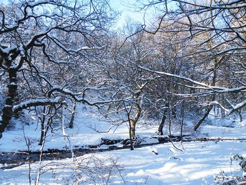 Snow - Jan '10 047
