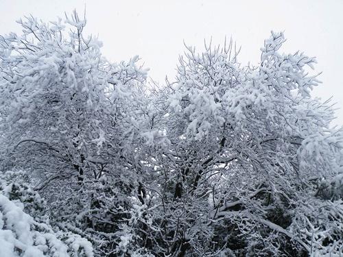 Snow - Jan '10 006