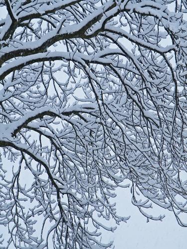 Snow - Jan '10 014