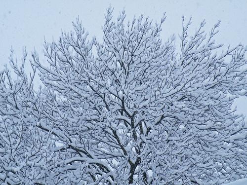 Snow - Jan '10 015