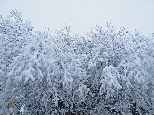 Snow - Jan '10 016
