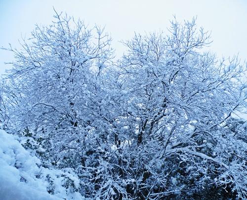 Snow - Jan '10 019