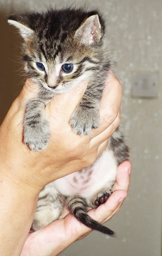 Copy of Kittens 018