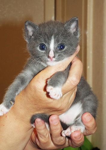 Copy of Kittens 020