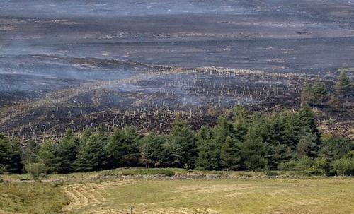 smithills-burned-saplings-750x455