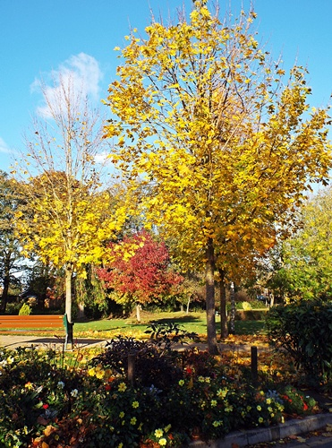 Copy of close park, radcliffe 040