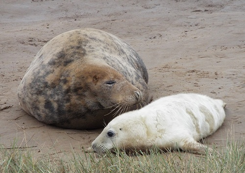 donna nook & willow lakes - nov. 2013 040