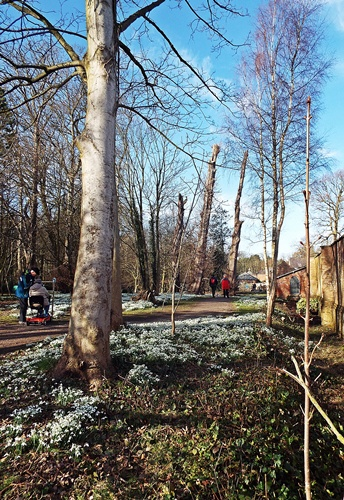 Copy of Lytham Hall - snowdrop walk 015