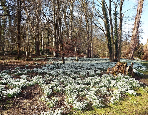 Copy of Lytham Hall - snowdrop walk 016