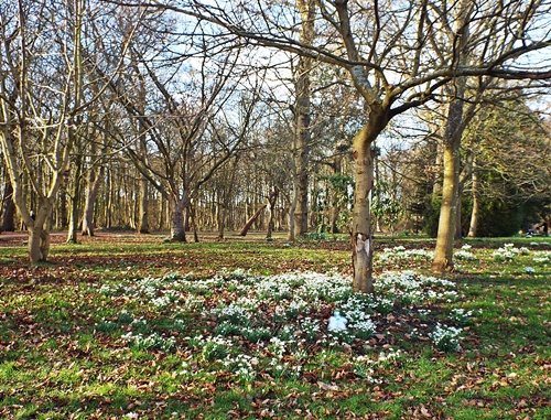Copy of Lytham Hall - snowdrop walk 025