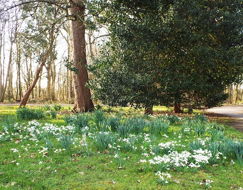 Copy of Lytham Hall - snowdrop walk 027