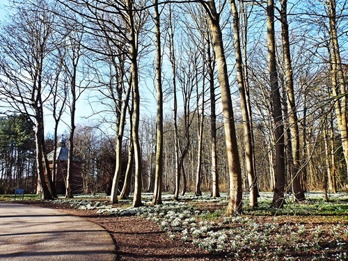 Copy of Lytham Hall - snowdrop walk 033