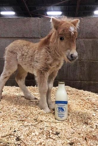 Foal 2 - Copy