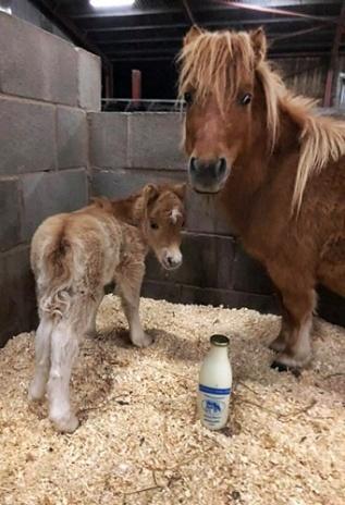 Foal 3 - Copy