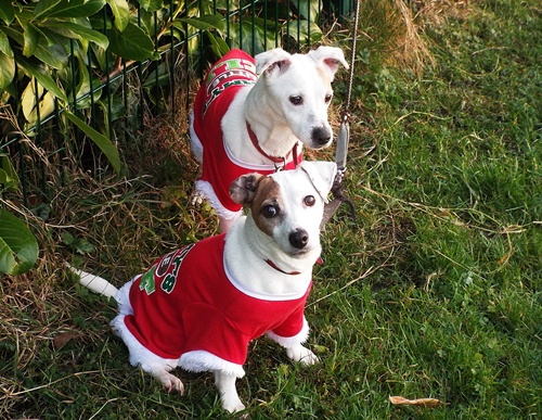 Copy of Sophie & Poppie - little elves 016