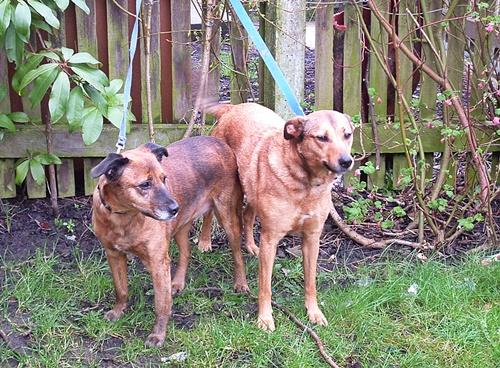 George & Maggie, Fliss & Daisy - Feb. & April 07 011
