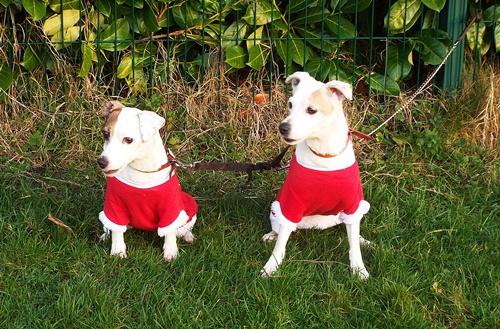Copy of Sophie & Poppie - little elves 011