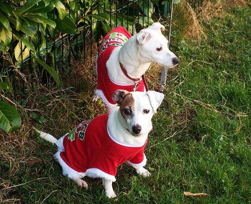 Copy of Sophie & Poppie - little elves 015